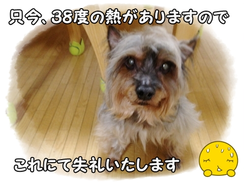 IMG_3146 (1)