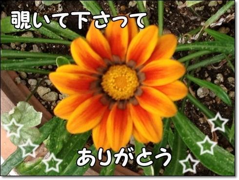 IMG_3281 (1)