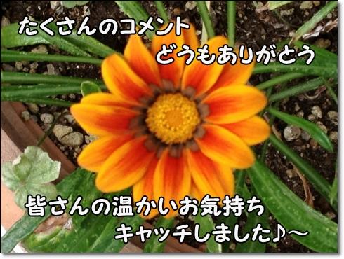 IMG_3281 (2)