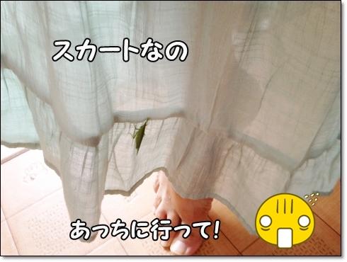 IMG_3683 (1)