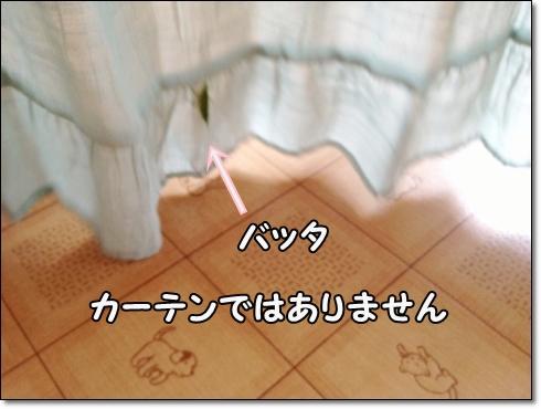 IMG_3682 (1)