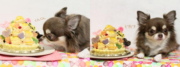 おトントンとケーキ