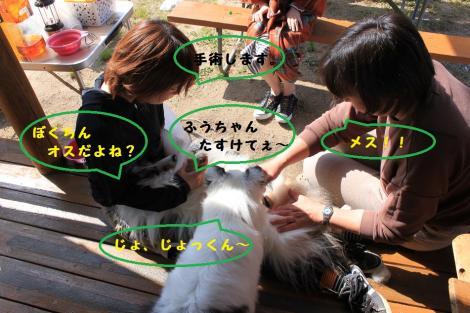 IMG_7720+-+繧ウ繝斐・_convert_20130508153550