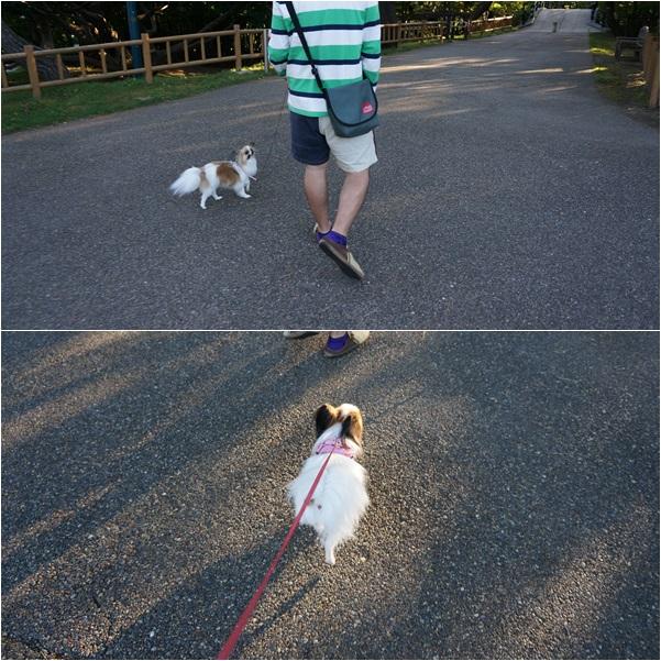 20130925 函館公園2