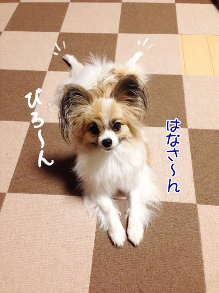 IMG_4472 (450x600)