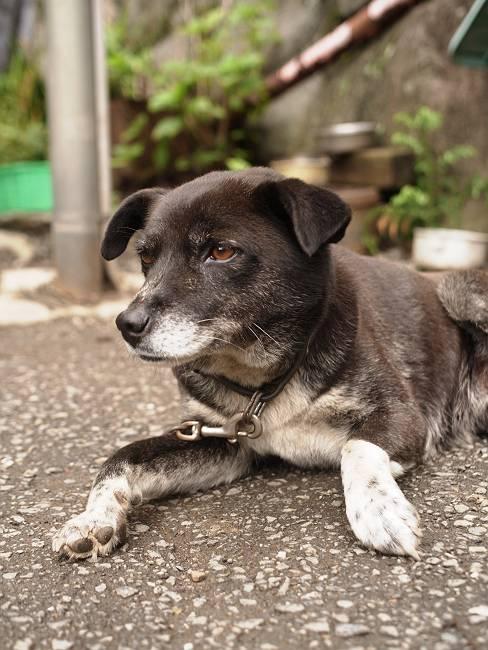 三頭山荘 犬1-s
