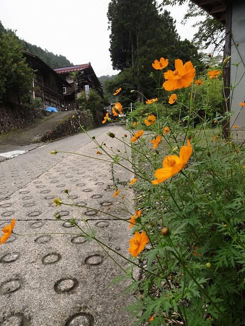 三頭山荘 花1-s