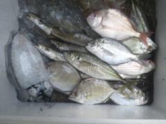 漁師直送の魚