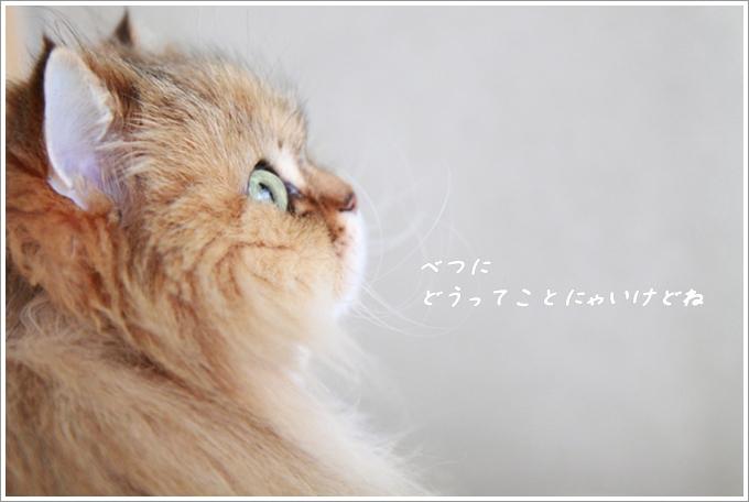 5_20130403144437.jpg