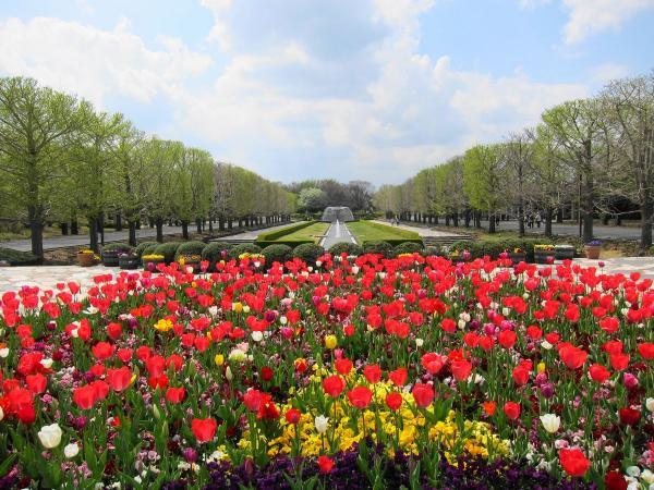 昭和記念公園・チューリップ1〔フリー写真〕