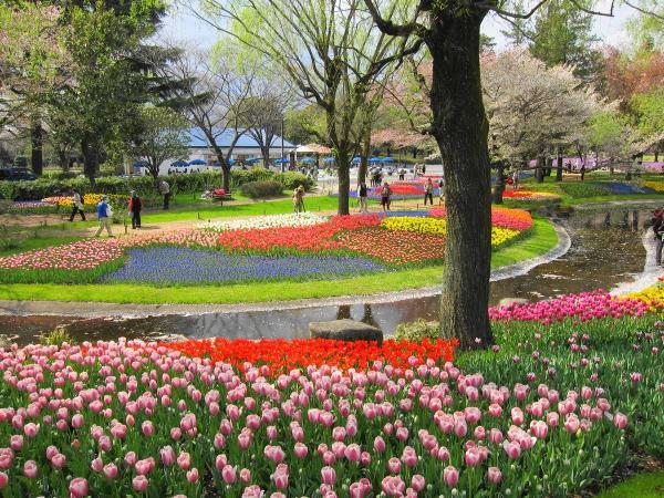 昭和記念公園・チューリップ3〔フリー写真〕