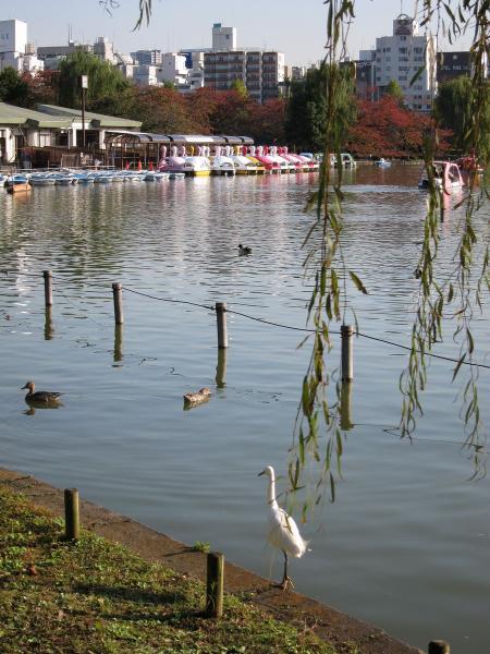 上野公園・不忍池1〔フリー写真〕