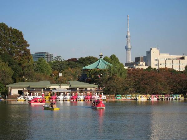 上野公園・不忍池2〔フリー写真〕
