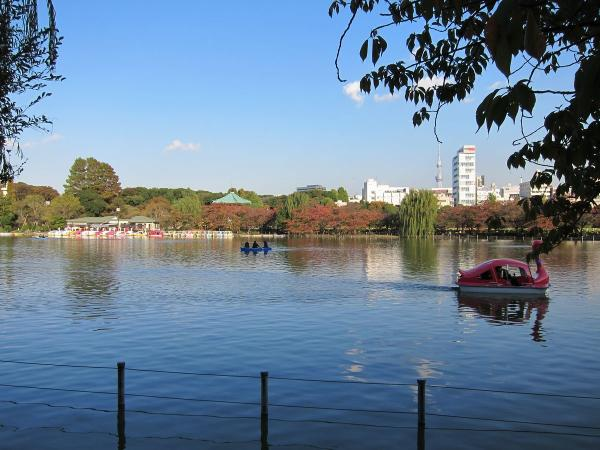 上野公園・不忍池3〔フリー写真〕
