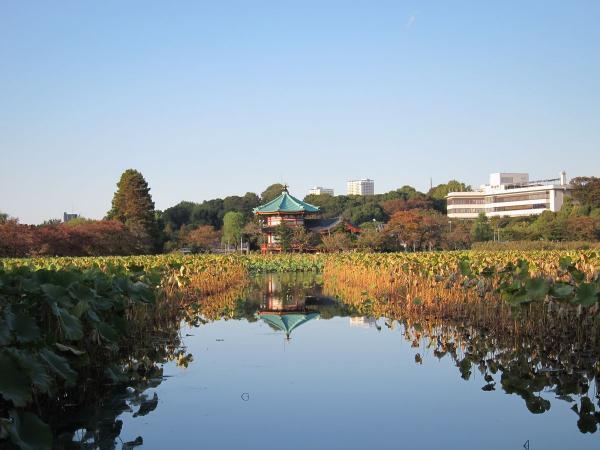 上野公園・不忍池5〔フリー写真〕