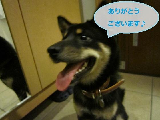 IMG_0980.jpg