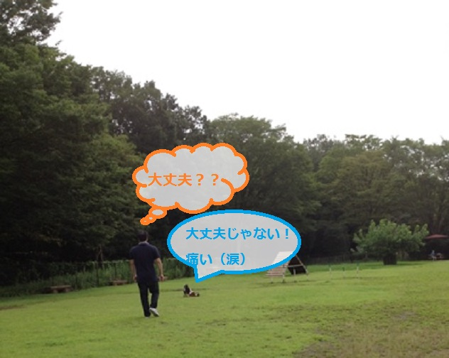 sabu4.jpg