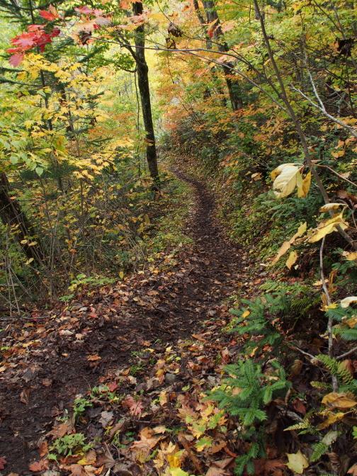 紅葉の森林浴