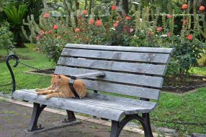 公園ベンチ 茶トラ猫 愛ちゃん Ai-chan The Ginger Cat