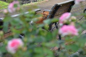 公園ベンチ猫 Summer Bench Cat