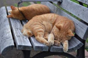 茶トラ猫 愛ちゃん 兄弟猫 公園ベンチ猫 Summer Bench Cats