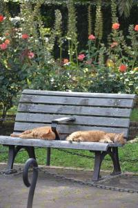 茶トラ猫 愛ちゃん 兄弟猫 公園ベンチ Summer Bench Cats