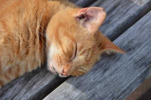 茶トラ猫 愛ちゃん 公園ベンチ猫 Ai-chan The Ginger Cat on Summer Bench
