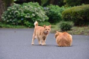 茶トラ猫 愛ちゃん Ginger Cats Greeting