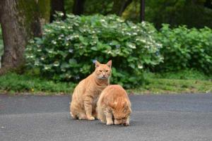 兄弟猫 Cat Brothers