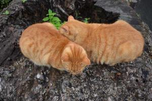 兄弟猫 Cat Brothers On Tree Stump
