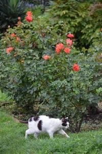 猫とバラ Cat and Roses