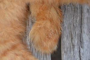 ベンチ猫 Bench Cat