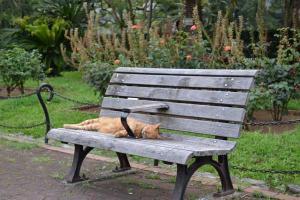 夏猫 Cat in Summer