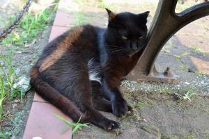黒猫 Just a Black Cat