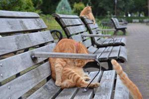 ベンチ猫 Bench Cats