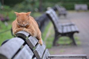 Ai-chan The Ginger Cat Sprawling On Bench Top