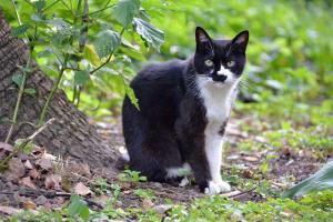白黒猫 A Black and White Cat