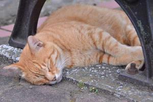 夏猫 Cat on a Hot Day