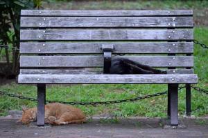 夏猫 Cats on a Hot Day