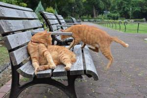 兄弟ベンチ猫 Cat Brothers On Bench
