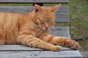 ベンチ猫 Cat On Bench (Ai-chan 愛ちゃん)