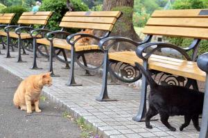 Bench Cats at Food Time