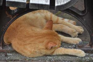 Summer Cat under Bench