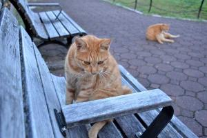 Cat, Ai-chan's Brother, On Bench