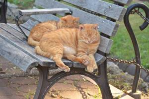 Cat Brothers On Bench