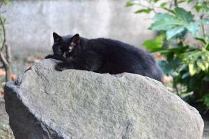 A Black Cat Stretching Out On The Rock