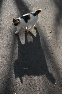 Walking Cat and Shadow