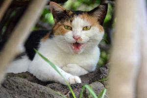 Singing Cat (2/3)