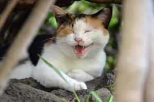 Singing Cat (3/3)