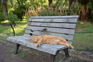 Ai-chan The Cat Lying On Bench